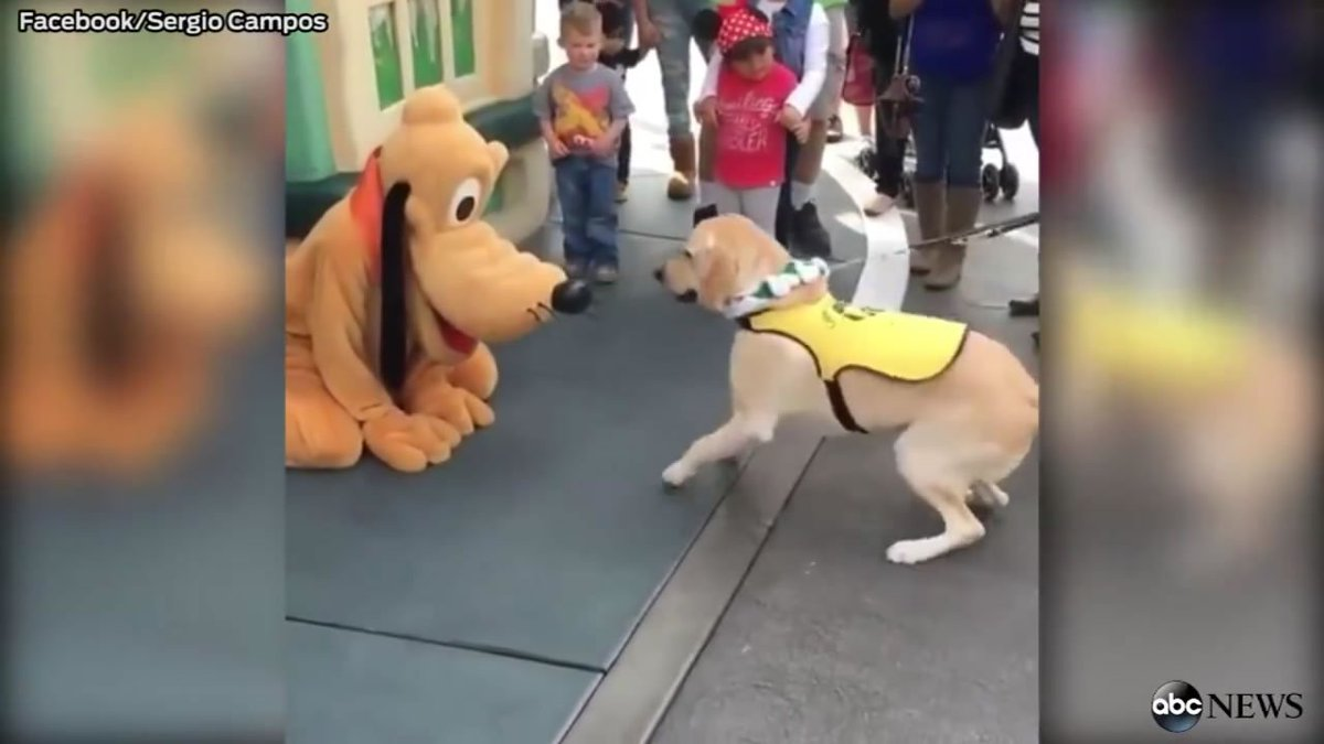This dog can barely contain himself after meeting Disney's Pluto.
