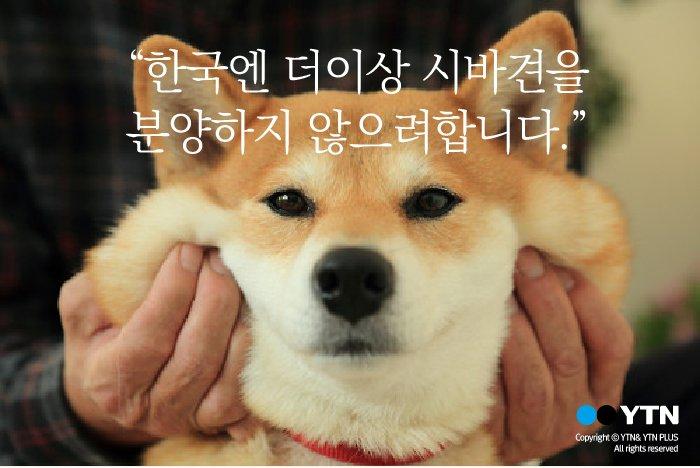 """[한컷뉴스] """"시바견을 한국으로는 분양하지 않겠습니다"""" https://t.co/O1WgANYwNC https://t.co/lS47c34pRP"""