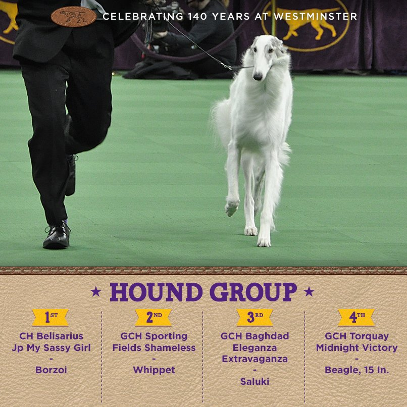 Best Hound - Winners of the 140th Westminster Kennel Club Dog Show in New York, 15 - 16 February 2016 (BIS)