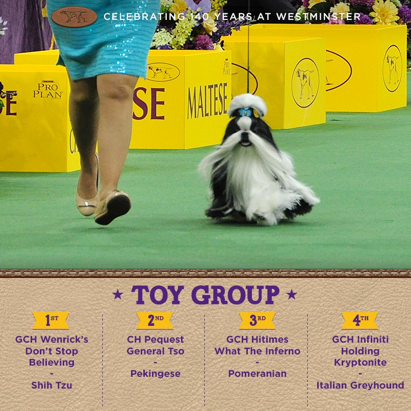 Best Toy - Winners of the 140th Westminster Kennel Club Dog Show in New York, 15 - 16 February 2016 (BIS)