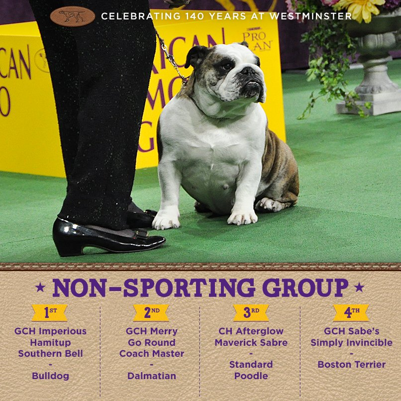 Best Non-Sporting Dog - Winners of the 140th Westminster Kennel Club Dog Show in New York, 15 - 16 February 2016 (BIS)