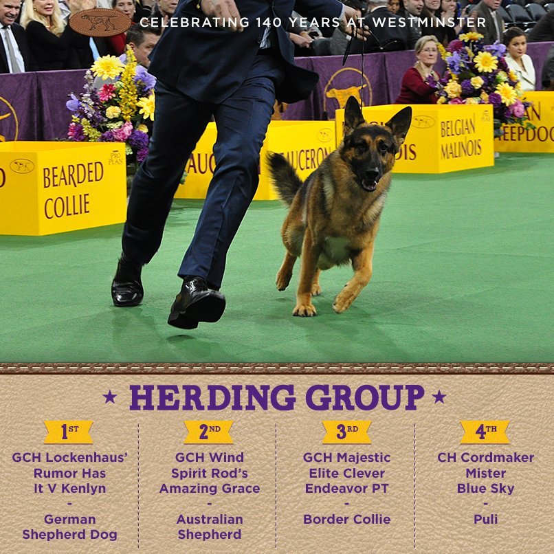 Best Herding - Winners of the 140th Westminster Kennel Club Dog Show in New York, 15 - 16 February 2016 (BIS)