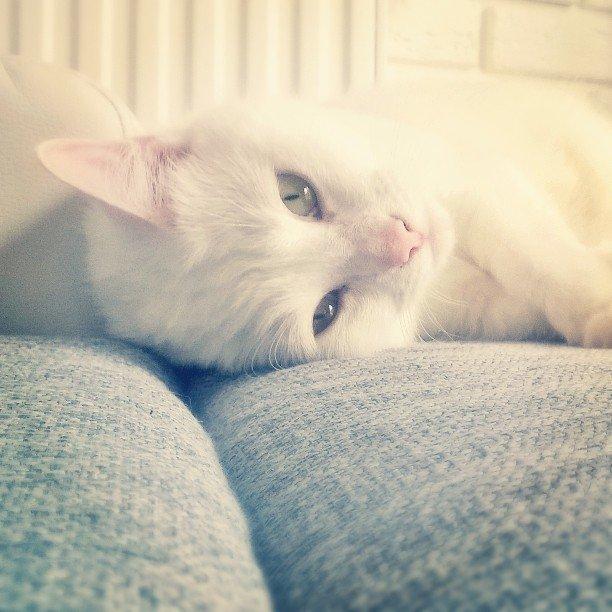 Albinocat On Jumpiccom
