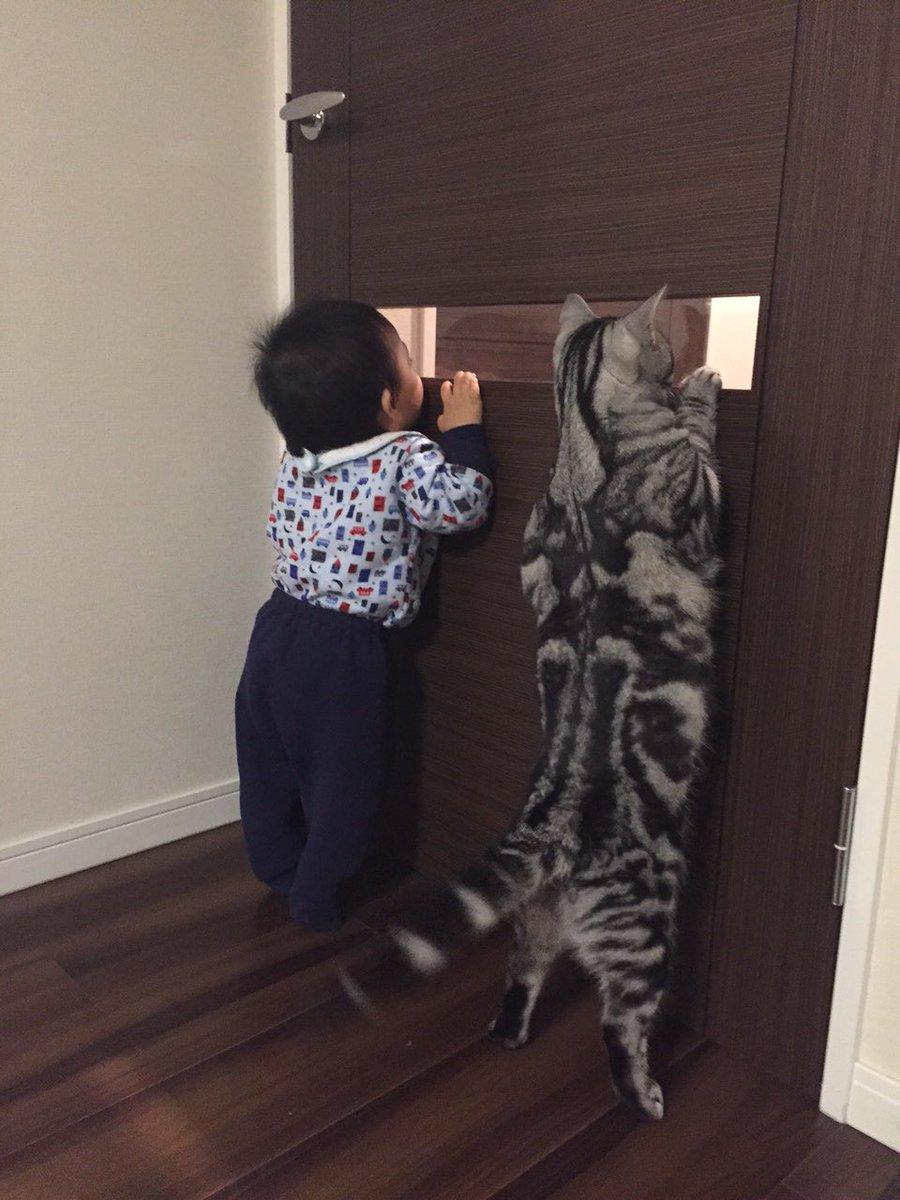 可愛い〜 RT @nyanpedia: 猫と赤ちゃん。 「ねーねー何見てるのかニャ?」 「こっちじゃ見えないニャ!!」 「……何も見えないニャ…」 https://t.co/Y7wQ9wEaja