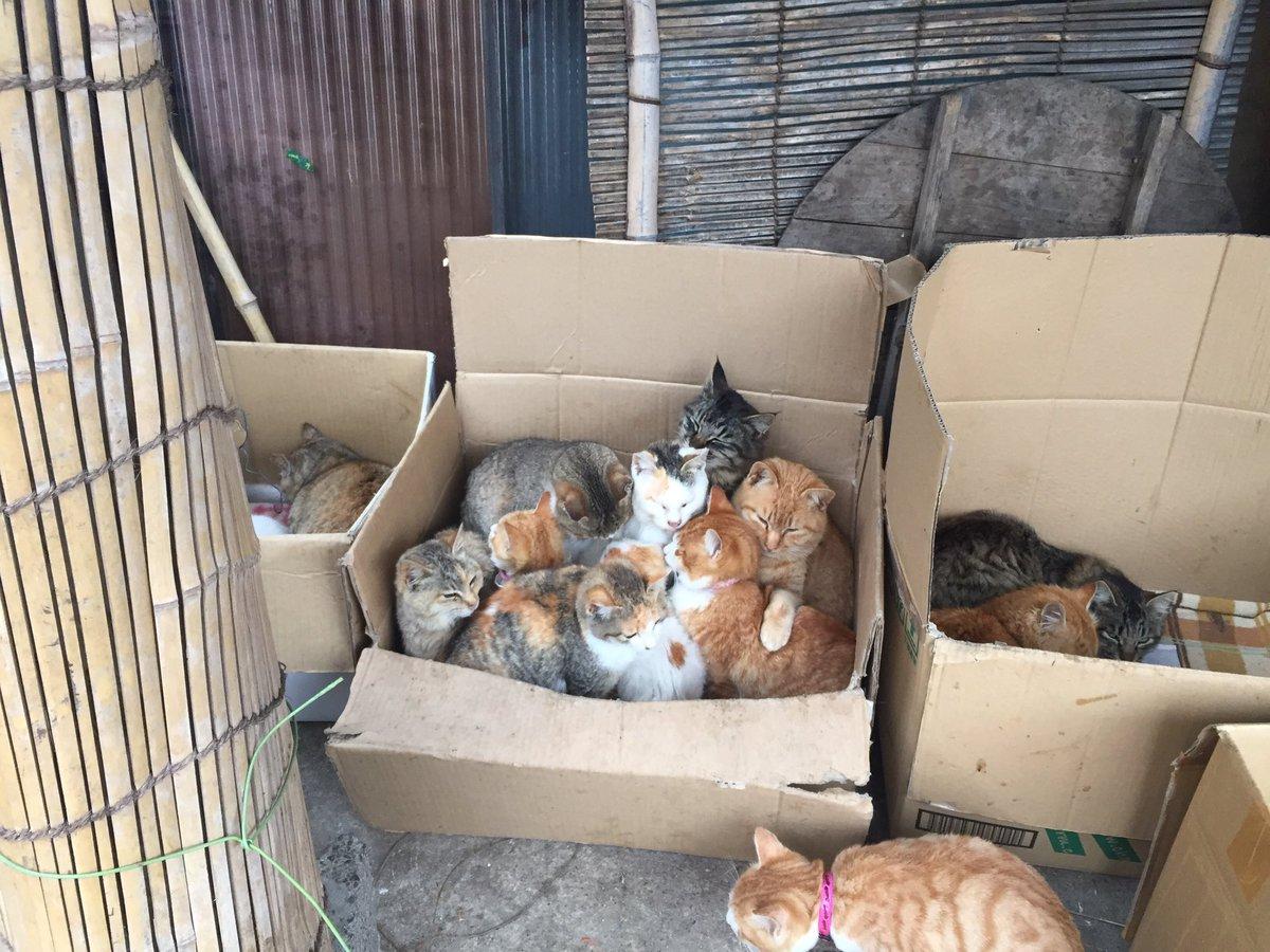 とっても寒い日はダンボールハウスで温まりたい!1匹の猫が入ろうとしていますがこれ以上入れるのでしょうか?笑 pic.twitter.com/Ai0LrYasp9