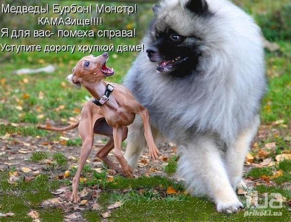 Интересные открытки с собаками с надписями