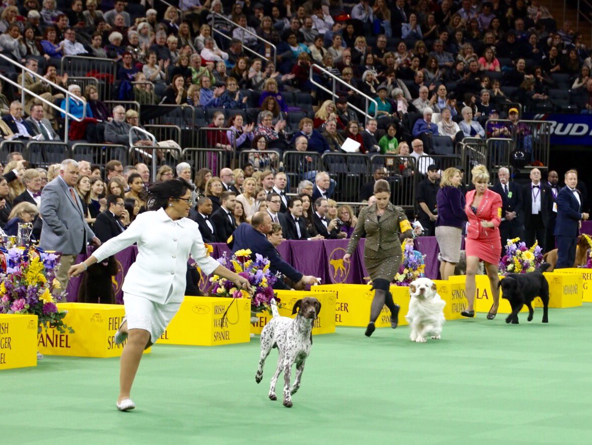 The 140th #WKCDogShow Best in Show winner is the German Shorthaired Pointer! https://t.co/1h4BydWLm9