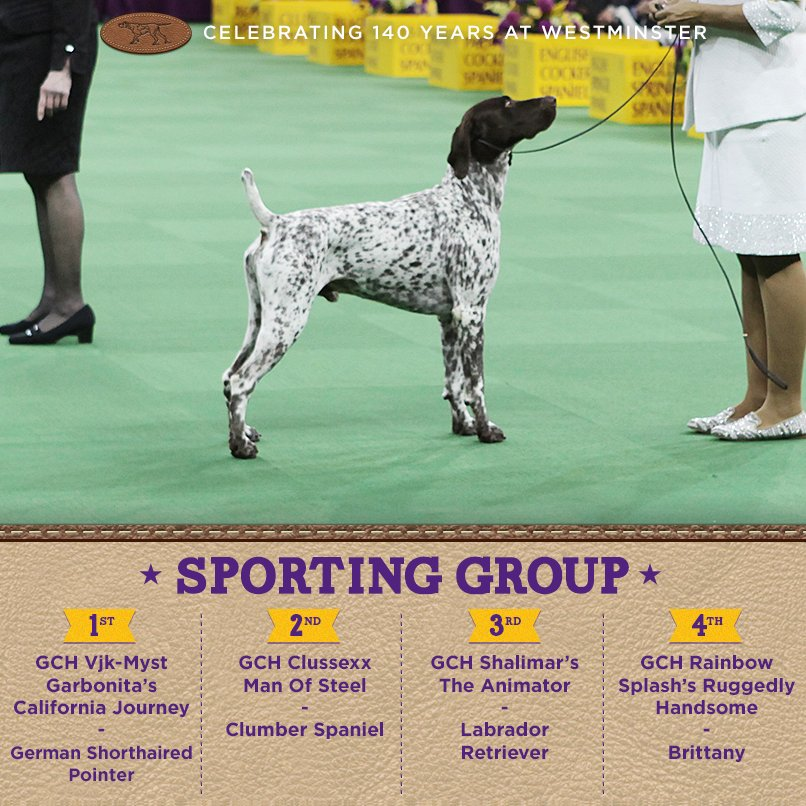 Best Sporting - Winners of the 140th Westminster Kennel Club Dog Show in New York, 15 - 16 February 2016 (BIS)