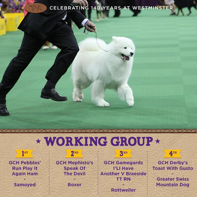 Best Working - Winners of the 140th Westminster Kennel Club Dog Show in New York, 15 - 16 February 2016 (BIS)