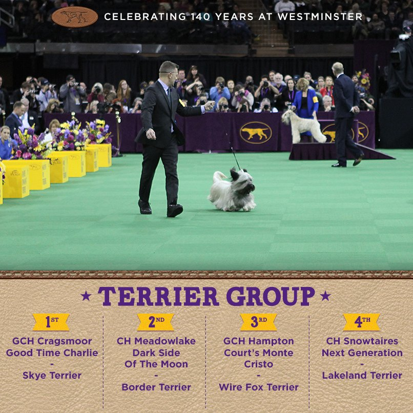 Best Terrier - Winners of the 140th Westminster Kennel Club Dog Show in New York, 15 - 16 February 2016 (BIS)