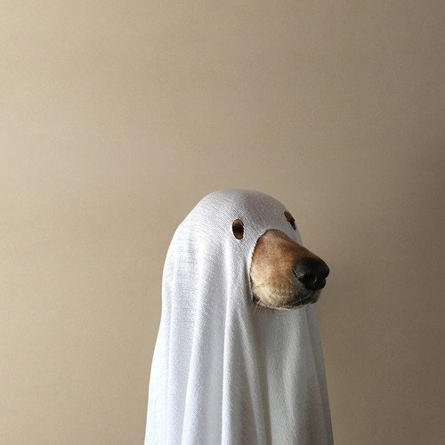 Dog disguised as ghost - on Hello Lovely Studio