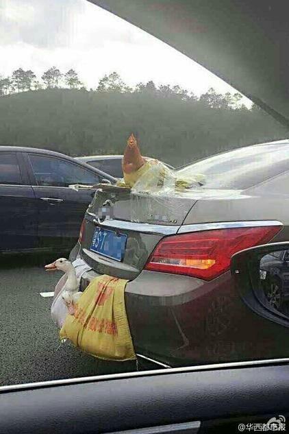 広東人は故郷の鶏をおみやげに持って帰ってくる頃。テープで貼り付ける技はニュータイプだな。 pic.twitter.com/J9aWJQ2JWf