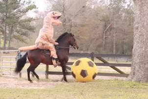 WATCHu003e A man in a dinosaur costume riding a majestic prancing horse / & Watchu003e a man in a dinosaur costume riding a majestic prancing horse ...