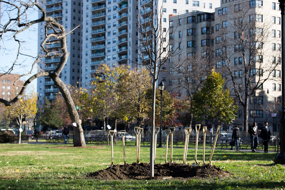 .@NYCParks & @NYRP planted 1million trees in #NYC w. @MillionTreesNYC https://t.co/s89vw736Yr #treescanchangeacity https://t.co/10rxd2BIlI