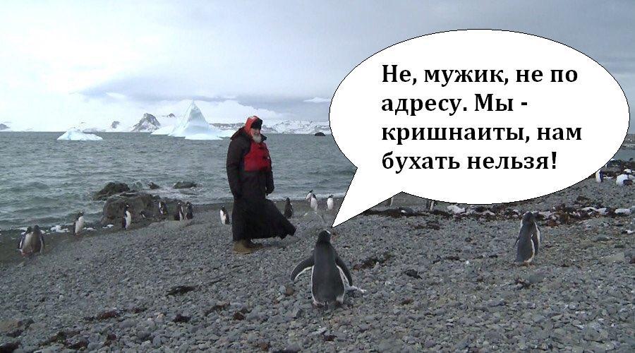Украина - один из лидеров измерения магнитного пульса Земли, - и. о. директора Национального антарктического научного центра Дикий - Цензор.НЕТ 4295