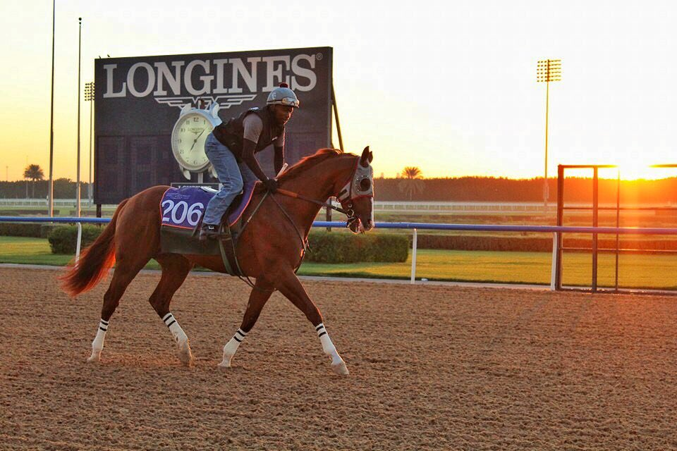 2016 CALIFORNIA CHROME EN DUBAI CbglFUxWwAAWLbr