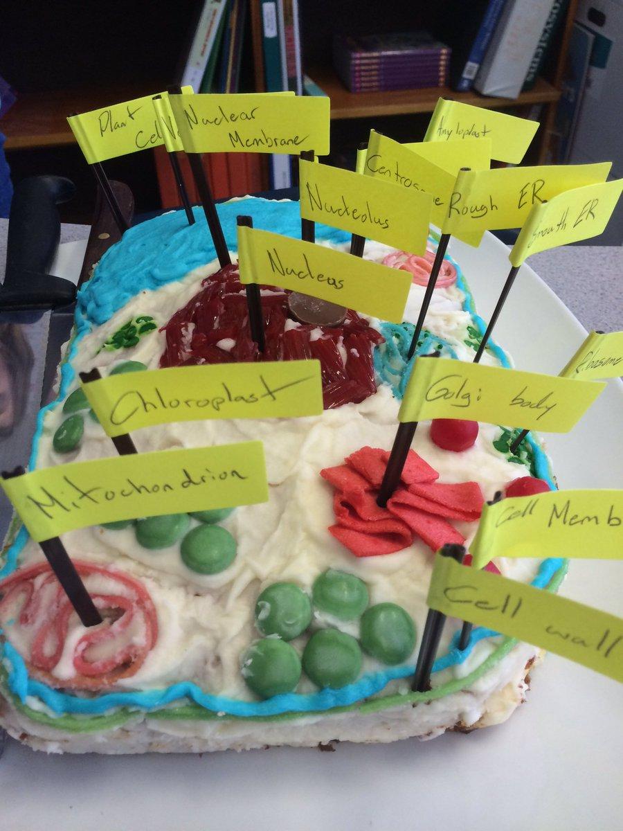 candy cell diagram 11 ulrich temme de \u2022