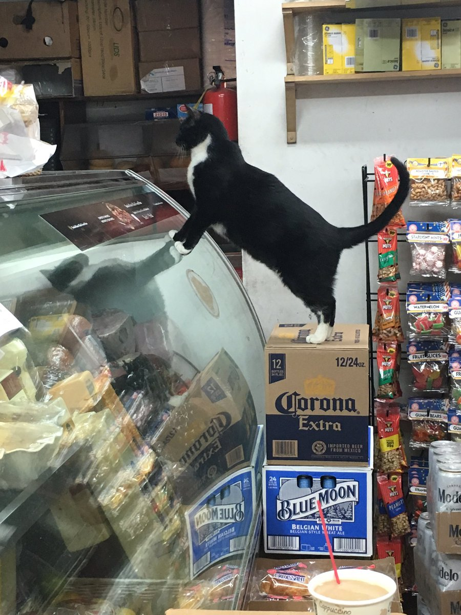 "NYC bodega cats be like ""let me get a chopped cheese, extra hot sauce"""