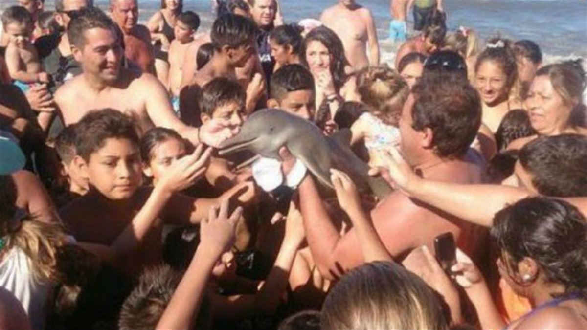 La vita di un Delfino in cambio di un Selfie