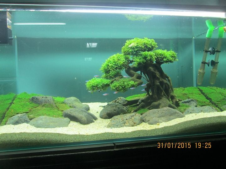"Acie BonsaiDriftwood on Twitter: ""bonsai driftwood for ..."
