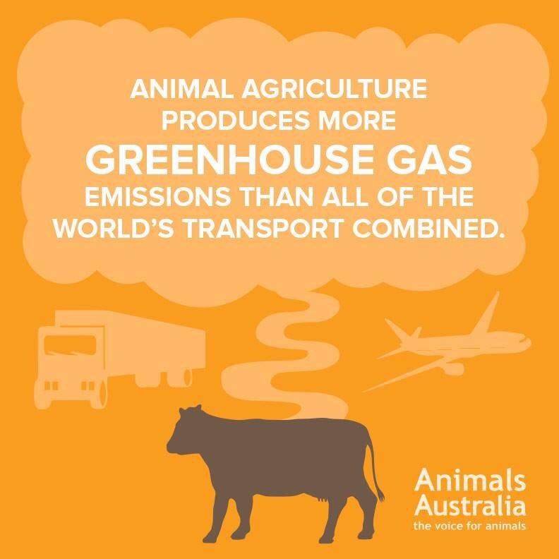 Image result for gas emissions livestock