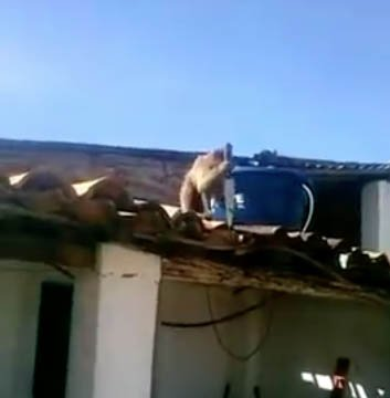 Knife-wielding monkey terrorizes Brazilian bar after guzzling some rum https://t.co/pvHZsQUdNB https://t.co/7zrd91qukB