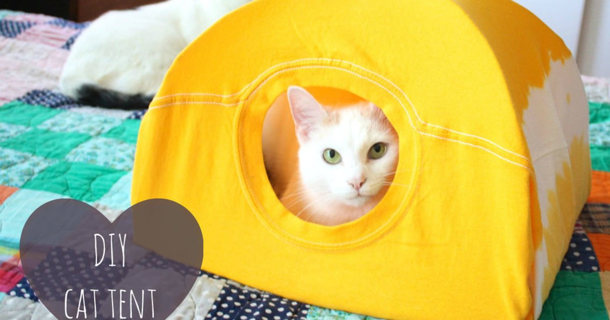 Treat your cat right this #LoveYourPetDay by making them a new tent! @HuffingtonPost  #DIY https://t.co/MwJVl94z4V https://t.co/YVSZum0NlL