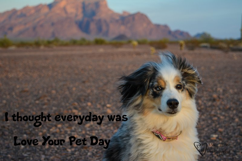 Love Your Pet Day. We celebrate everyday, don't you?  #loveyourpetday #dogs https://t.co/zb6v4ABQL5
