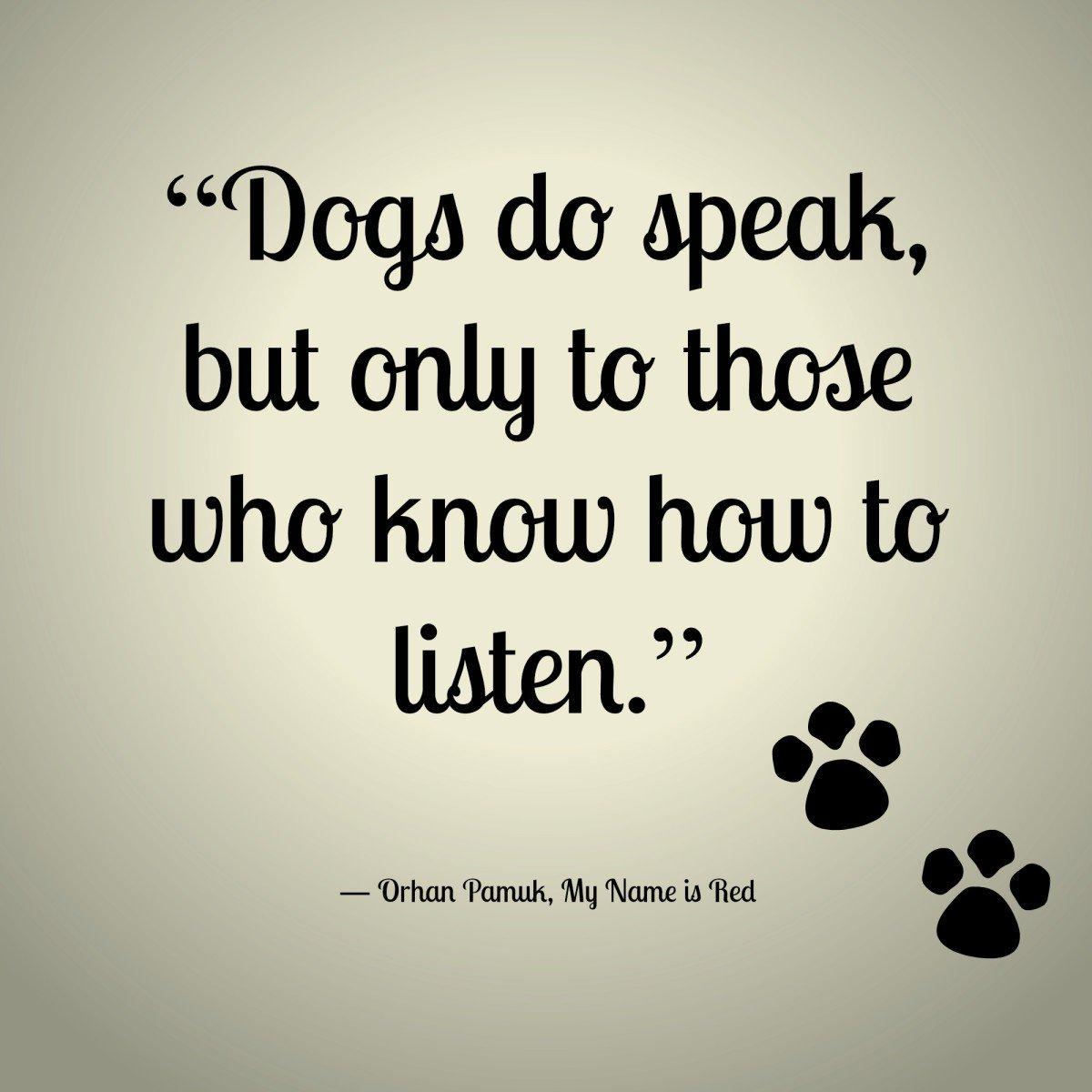 Quotes About Dog Friendship Noahs Bark Noahbarkpuppies  Twitter