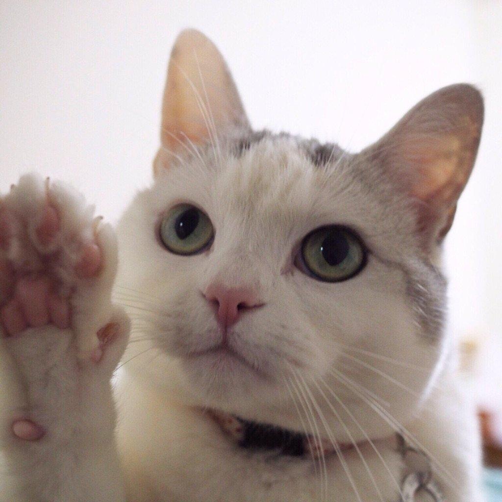 今日は何の日ですか?はい!猫の日です! https://t.co/FUmiB0xtVU