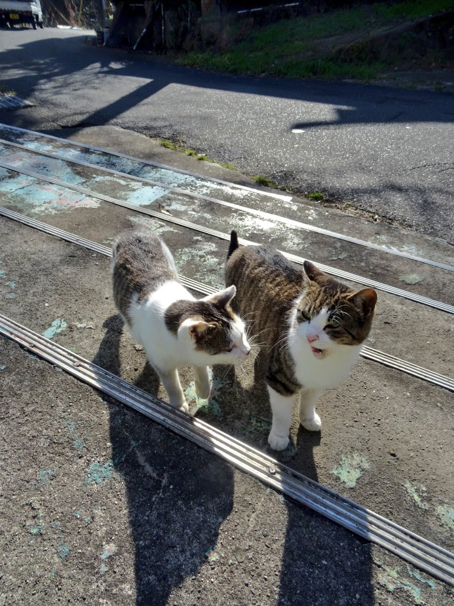 2月22日、猫の日、野良二匹 pic.twitter.com/jdXGZY0cK4