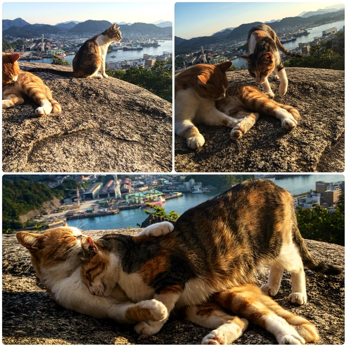 猫の日なので尾道で撮影した猫を再びお届けいたしますね!  この好き好き感がたまりませんでした #ネコの日 https://t.co/C2s8ed5HTy