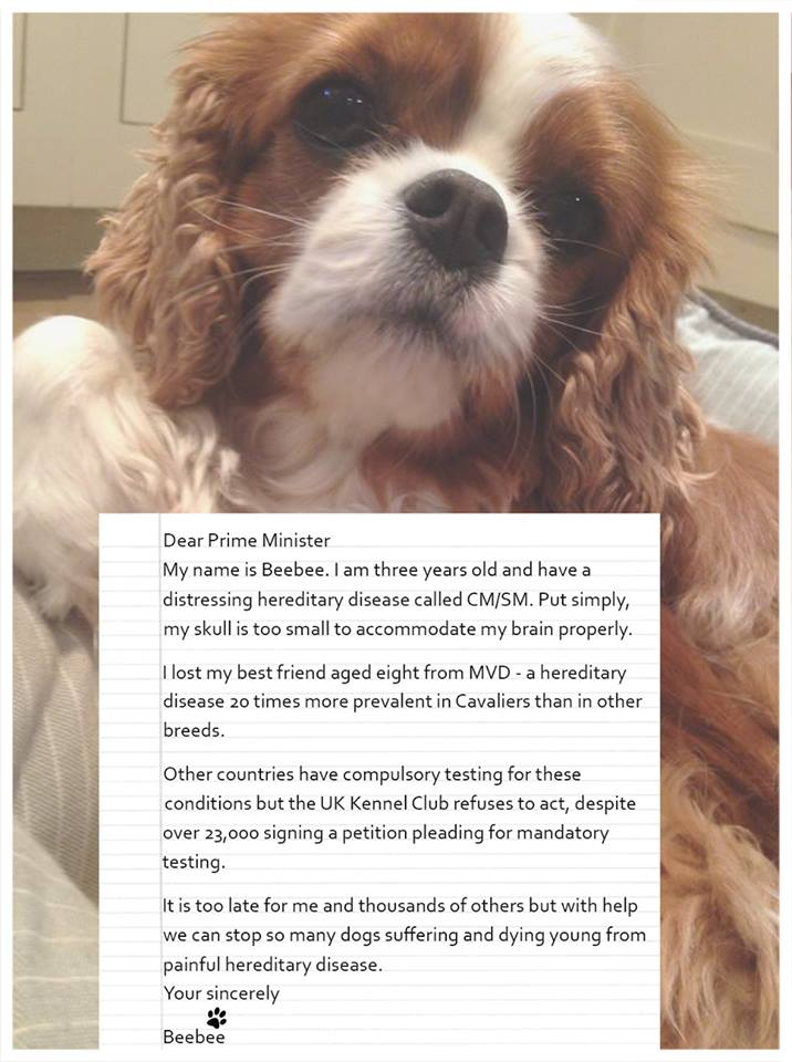 .@Number10gov UK dogs are suffering. 24k sign petition as @KCLovesDogs won't act on Cavalier health. Please help https://t.co/35EFMnLmUb