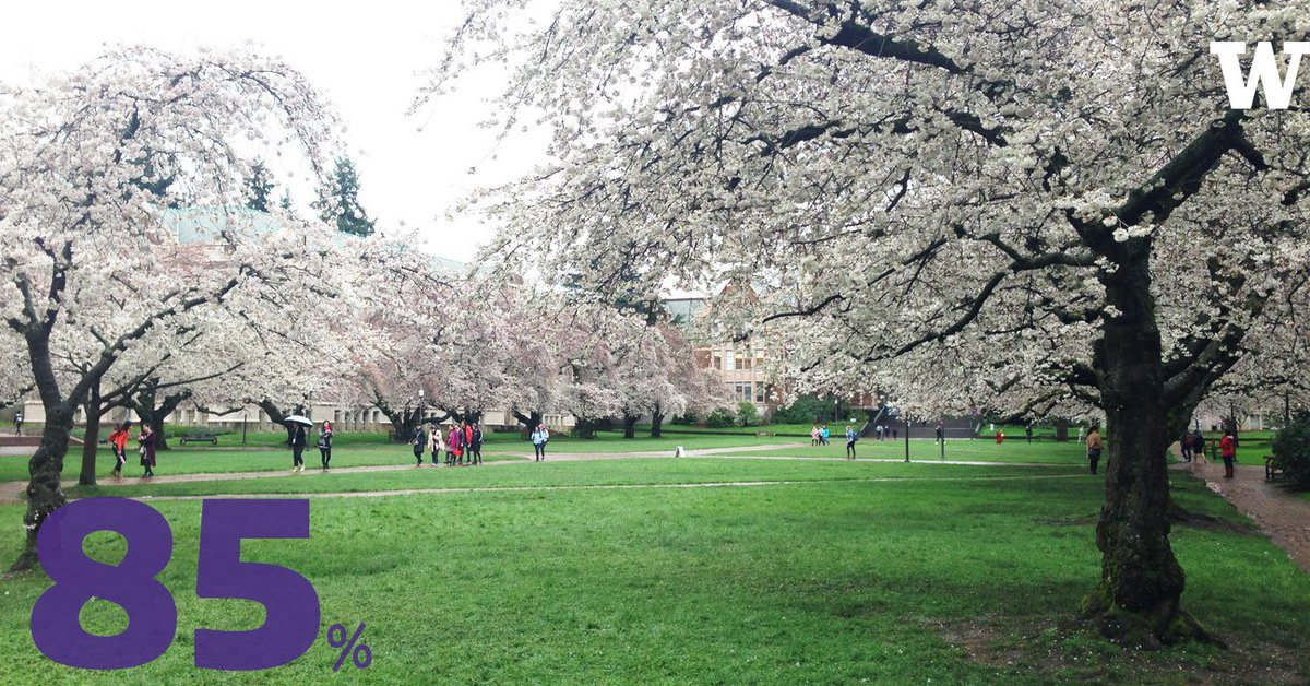 The @UW cherry blossoms are now 85% in bloom! #OneMoreWeek https://t.co/drJjRvM4BP @uwcherryblossom https://t.co/OFQGZVndYl