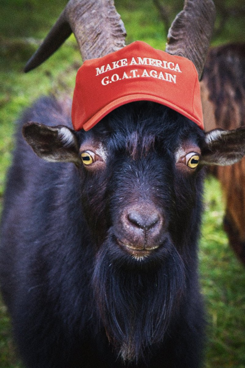 Black Phillip Blackphillip Twitter
