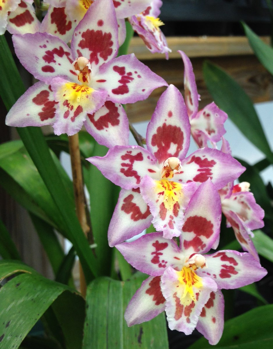 Appalachiantropicals On Twitter What A Great Name Beautiful