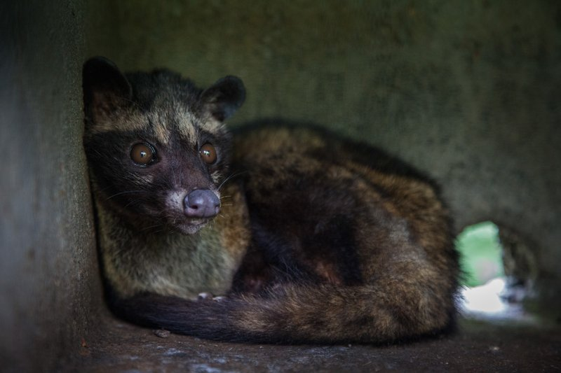 No luxury product is worth their suffering. #civet #coffee #kopiluwak #animalcruelty https://t.co/c4M3VpzaQx
