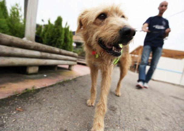 Neix la Plataforma Animalista de #SantCugat per garantir el benestar animal https://t.co/GnZAkuAMkY @DimitriCevallos https://t.co/xfR5AEPQ2P