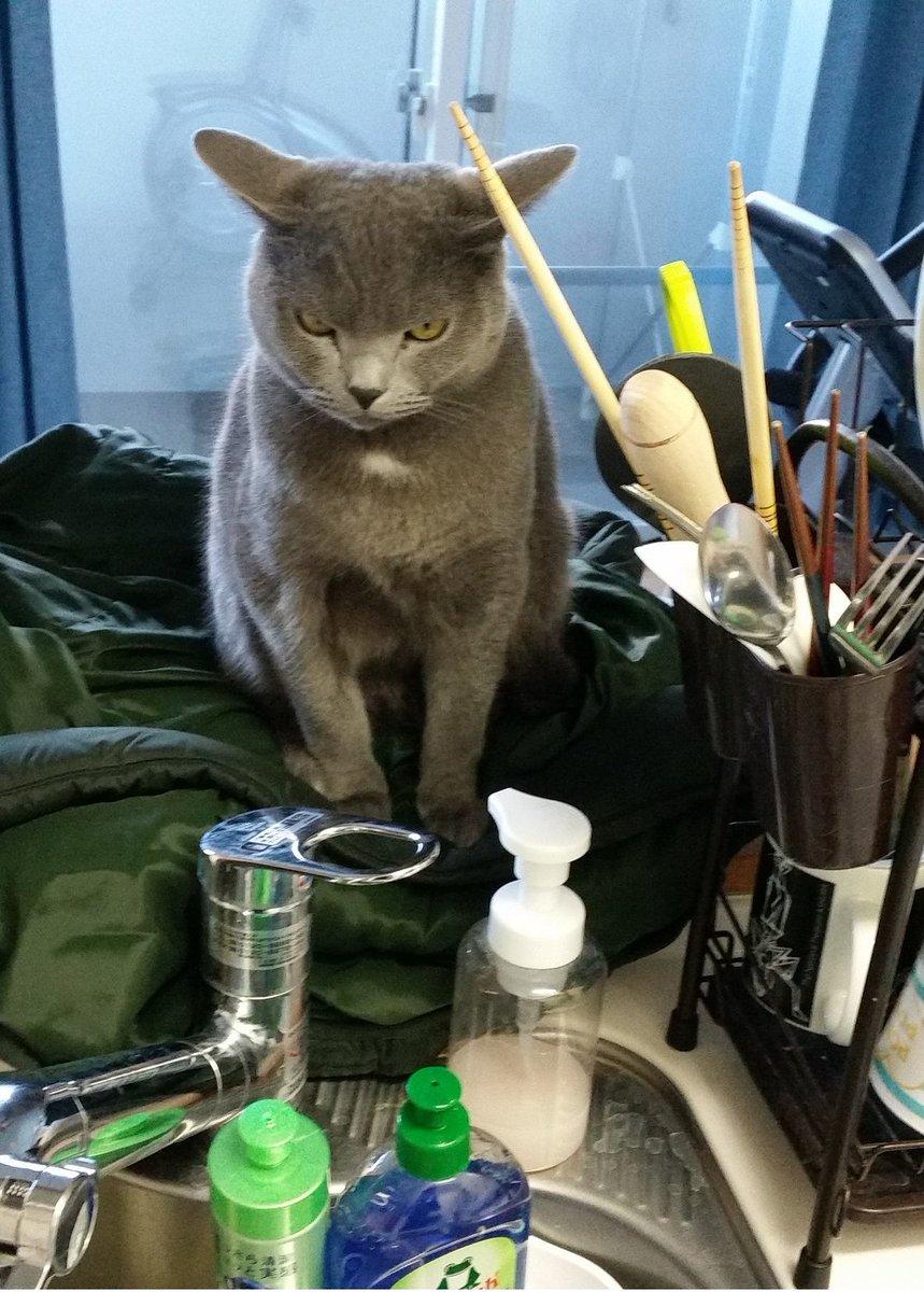 洗い物してる間、妖怪にずっと にらまれていました。おまえは食品衛生監視員か pic.twitter.com/MBG73GnlKX