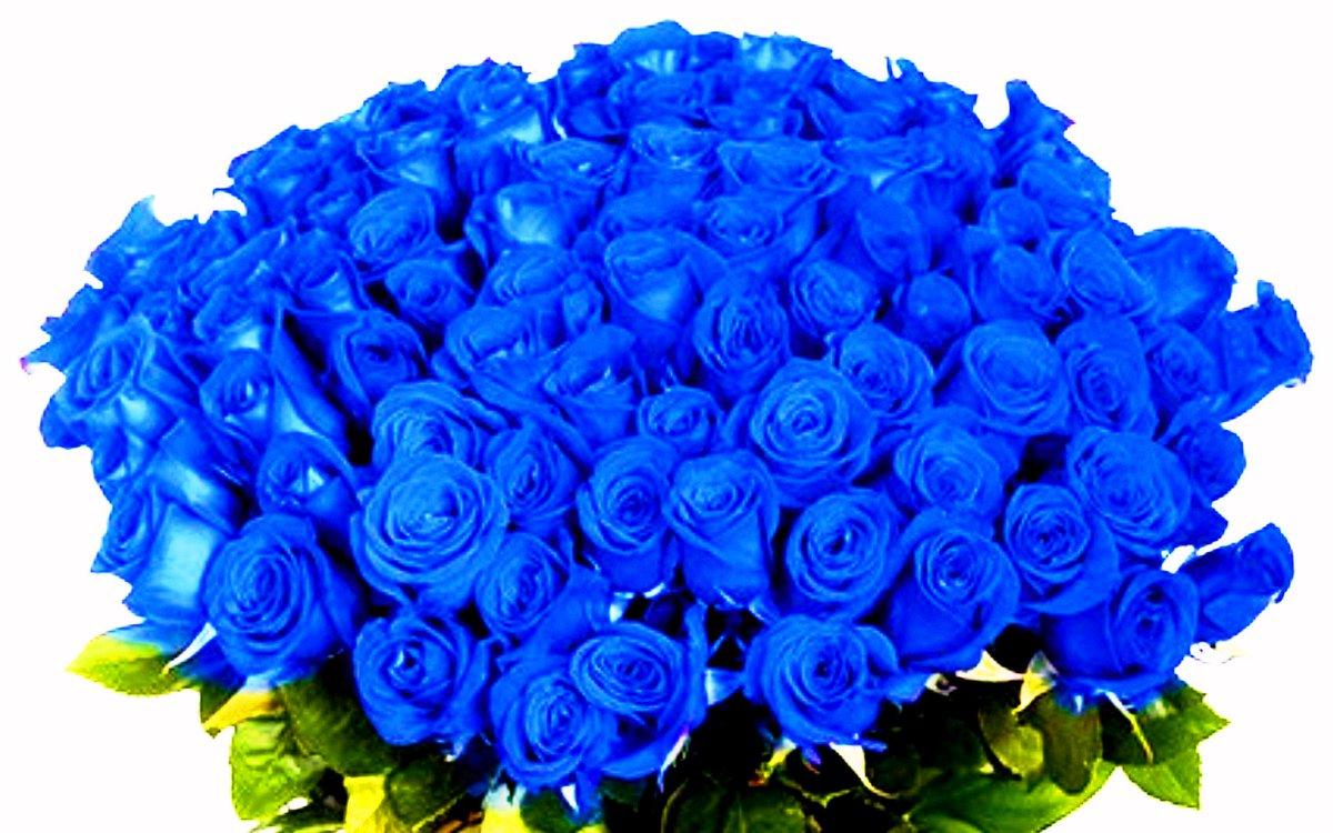 Синие розы фото букеты красивые