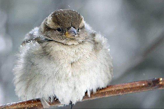 l 'hiver est là ! Cc9P7-nUkAApjlj