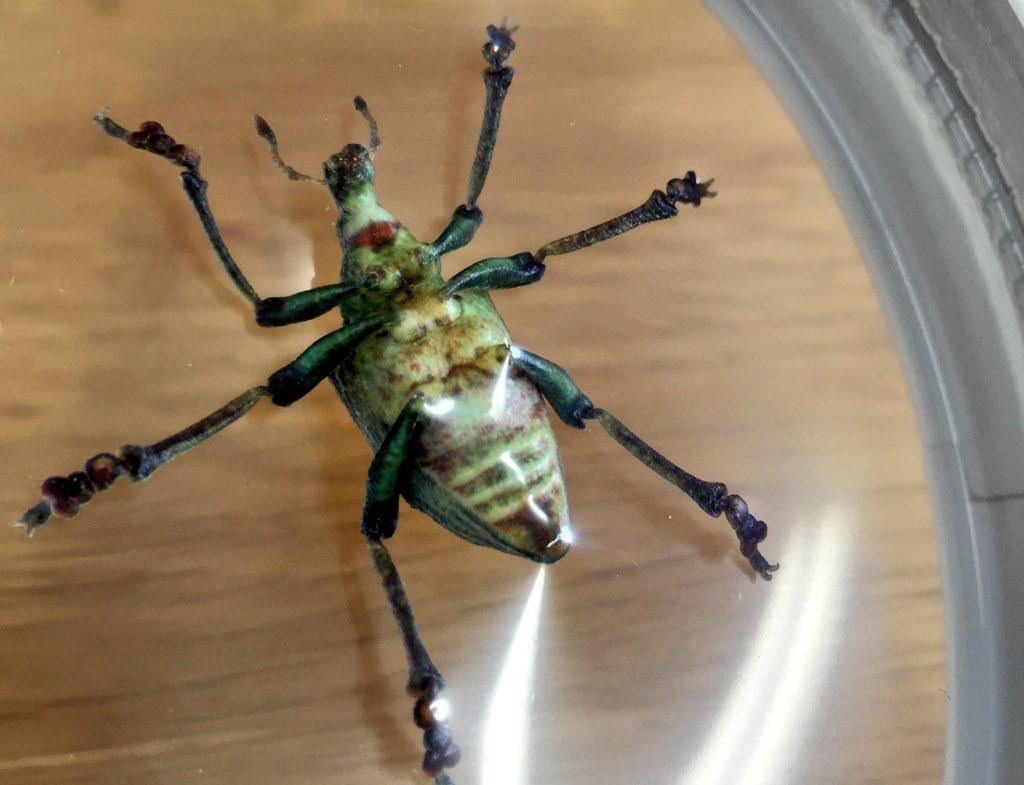 開発中のミマキエンジニアリングさんのカラー3Dプリンターと、超細密な小檜山先生の昆虫の3Dデータと、あと当社ですごい手伝った3Dデータ補正技術によるこの昆虫のモデル。リアル過ぎて、凄すぎて興奮する!しかも少し柔らかいよ。