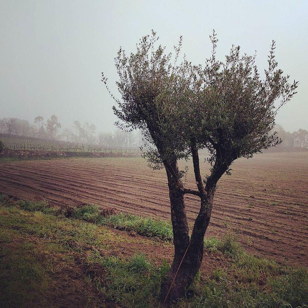 Morning in Vinho Verde. #travelgram #travel #portugal #instravel https://t.co/8blxHNwbxg