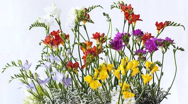 Jardinerie chrysopolis des vegetaux made in franche comte w - Office hollandais des fleurs ...