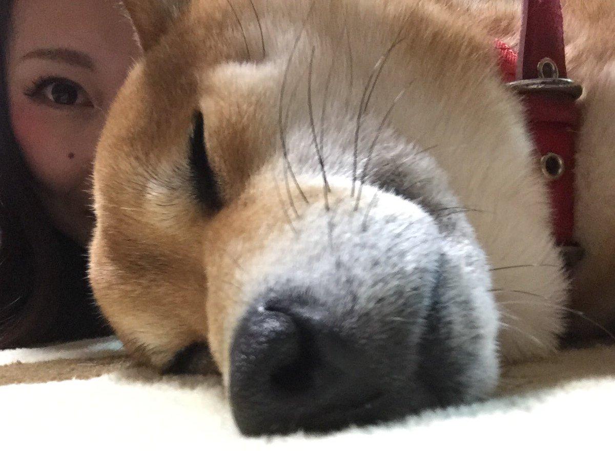 セルフィー💕 #寝顔 #柴犬 #shibainu