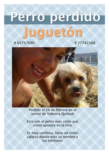 """Amigos, el """"Juguetón"""" está perdido en Quilpué, por favor RT https://t.co/ft8tZjYhlL"""