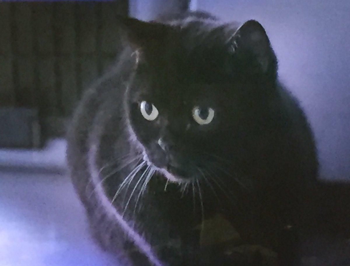 相棒14 の17話「シュレディンガーの猫」をテーマとして思考が結果を変える事、並行世界の4つの結末を辿り死者の転生?の猫が自己の死の真実へと教え子を導くという  ...