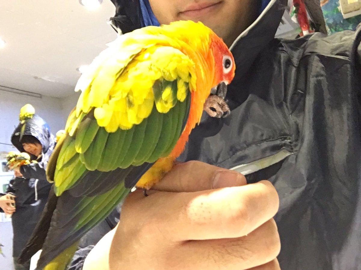 【鳥が激絡みしてくる鳥カフェ‼︎】 浅草「鳥のいるカフェ」のインコたちは非常に人に懐いていて頭に乗ったり手に止まったりしてくるぞ! 最初は可愛いが餌を出した瞬間豹変するから気をつけろ!