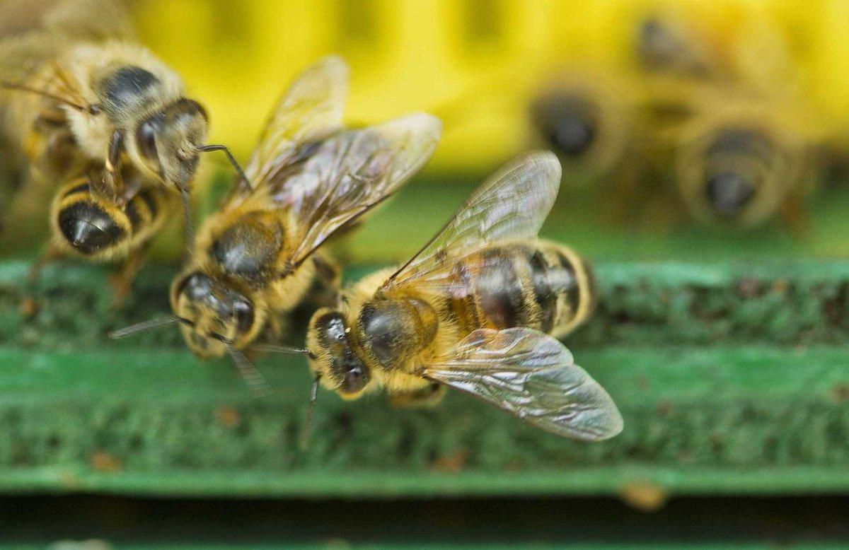 bijen, hommels en andere bestuivers. Ze dreigen allemaal te gaan verdwijnen - https://t.co/D88cv4LUcl https://t.co/USk03cfJBS