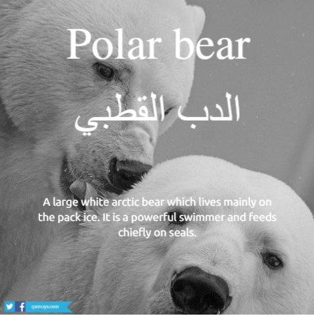 قاموسي انجليزي בטוויטר Polar Bear الدب القطبي تلفظ بولر بير انكليزي حيوانات انجليزي Https T Co Nzvnvnjjed